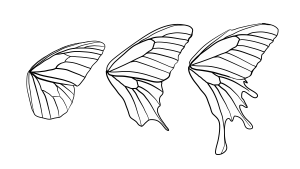 butterfly wings wing draw shape drawing shapes vector butterflies patterns clipart anatomy sketch pattern animals drawings template clip tutsplus step