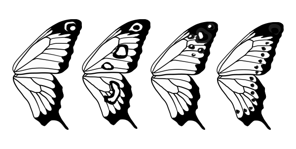 How to draw animals: butterflies, their anatomy and wing