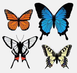 draw drawing butterflies easy butterfly wing patterns animals anatomy wings drawings tutorials simple schmetterling zeichnen animal beginners tutorial tutsplus pattern