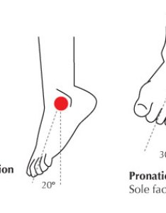 The ankle also human anatomy fundamentals flexibility and joint limitations rh design tutsplus