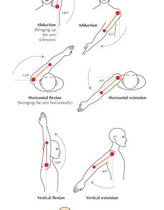Lock shown below is so effective the shoulder joint stretched to its limit by pressure and would dislocate if muscles came into play also human anatomy fundamentals flexibility limitations rh design tutsplus