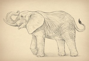 realistic animals drawing draw elephant easy elephants species anatomy animal drawings hard step simple pencil amazing things realistically illustration trunk
