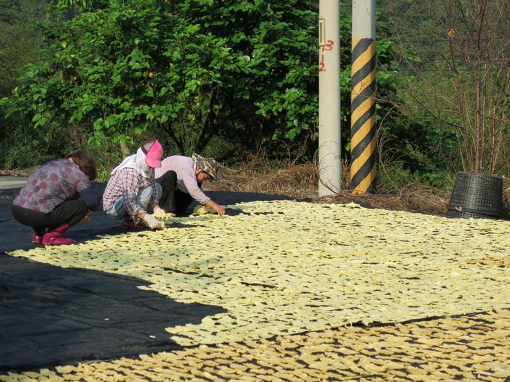 竹山的金黃美味 筍農搶好天氣曬筍乾 | 綜合 | 聯合影音