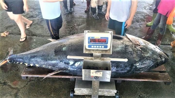 影/東港黑鮪魚拍賣破千 410公斤現身叫牠「最大尾」 | 生活 | 聯合影音