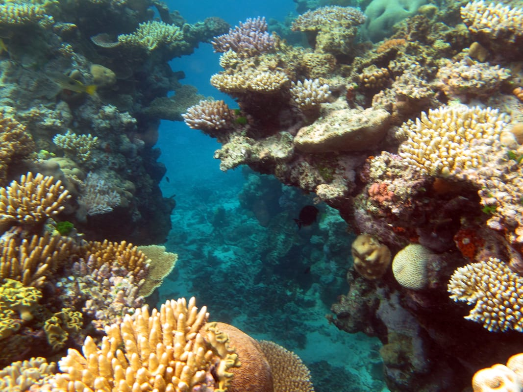 The Great Barrier Reef Has Been Pronounced Dead