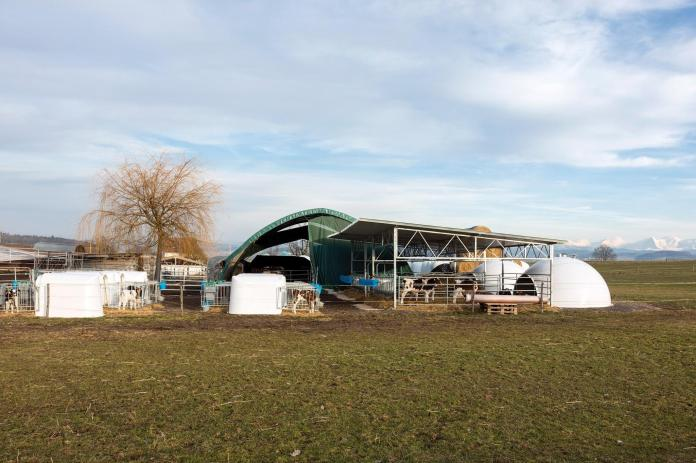 A model farm is seen here: on the left, there are small individual igloos to accommodate animals that were recently purchased. And on the right, there are group igloos, where calves can go after quarantine. They find there straw and a roof.