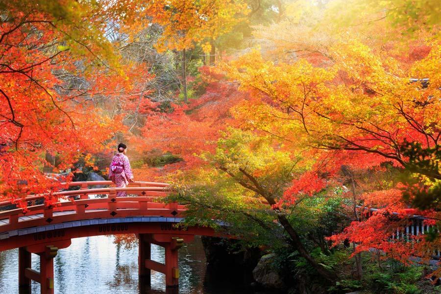 2021 magie de l automne japonais