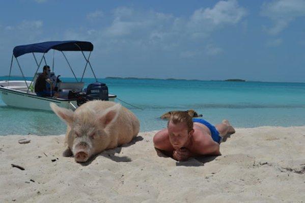 Big Major Cay lisola dei maiali alle Bahamas UNOTRE