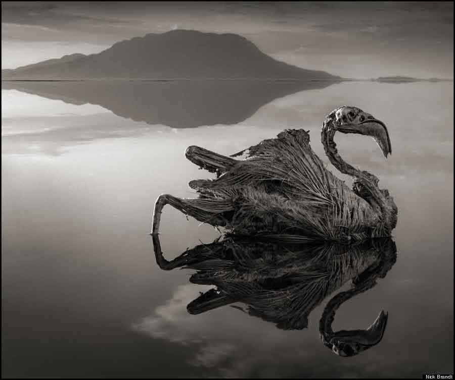 stone_animals_lake_03