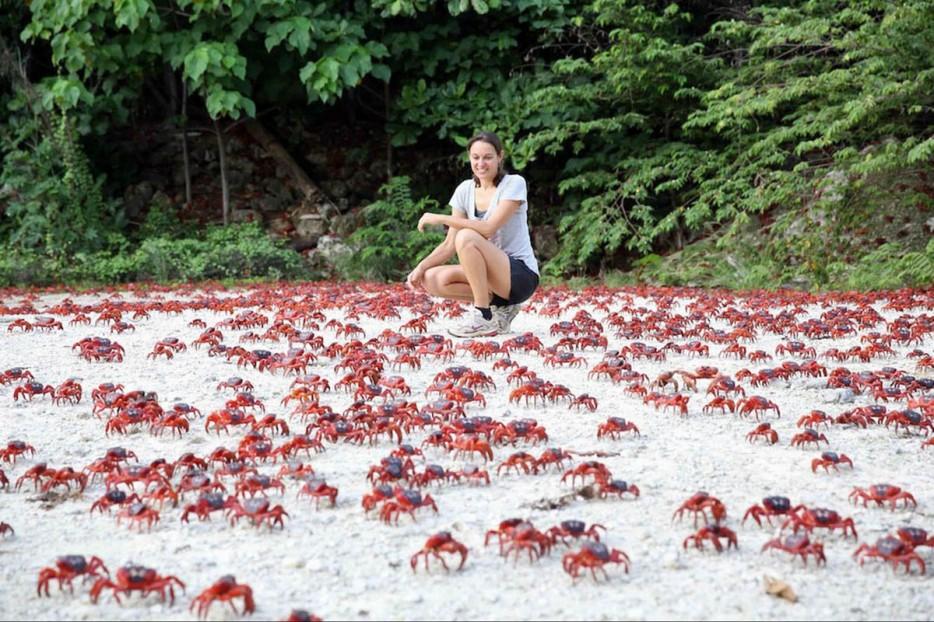 26 - Christmas Island red crab