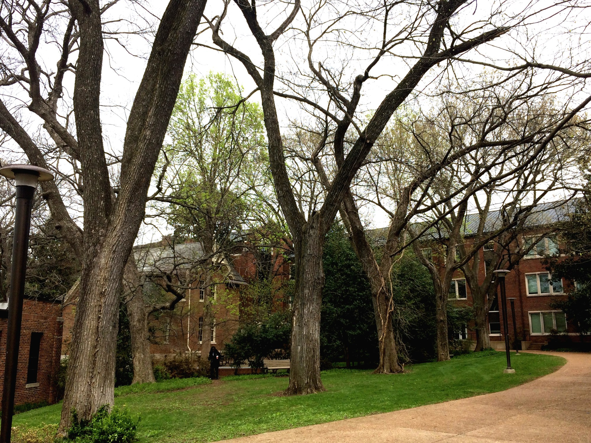hight resolution of hundred year old elms near the vaughn home