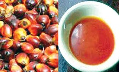 Price of palm oil records slight increase in Enugu - Vanguard