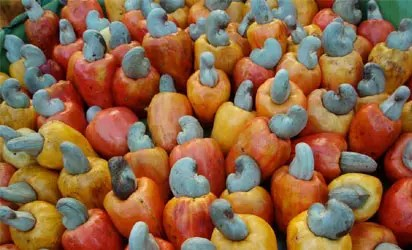 Cashew: Association wants governor to enhance farming