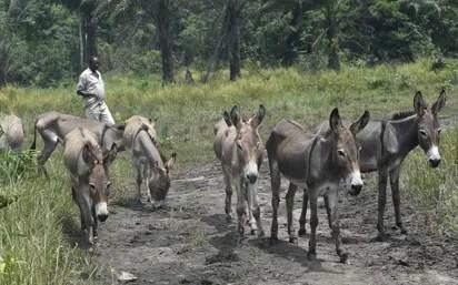 donkey meet