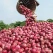 Stakeholders urge FG to wade into onions supply blockage