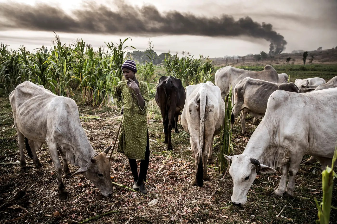 Image result for BREAKING: FG suspends RUGA Settlement Project