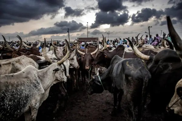 A-Ibom govt berates Enang over comments on RUGA