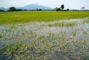 FLOOD: register farms with insurance scheme to avoid total loss — Govt.