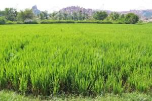 Agric, vocational skills: Nasarawa donates land to NDE