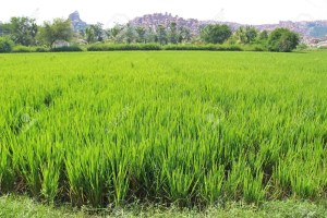 Kogi Government set to commission over N4 billion Rice mill factory