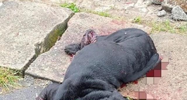 (Photos) Dog butchers 1-yr-old boy inAbuja