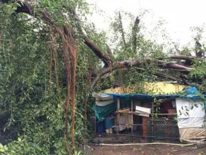 100-year-old tree falls in Oyo, kills 4, damages motorcycles, buses