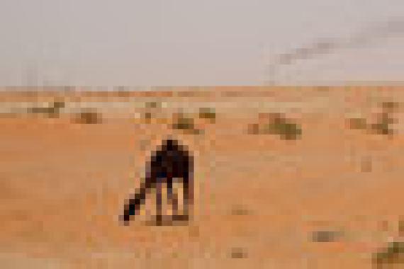 Крупнейший по уровню добычи нефти член ОПЕК – Саудовская Аравия. Согласно данным картеля на 2017 г., Саудовская Аравия добывает 9,96 млн баррелей в сутки и экспортирует 6,97 млн баррелей. В ежегоднике BP, одном из наиболее авторитетных источников статистических данных по нефти, приводятся другие цифры: в 2017 г. добыча Саудовской Аравии составляла 11,95 млн баррелей в сутки