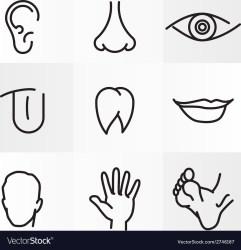body parts human vector icons royalty