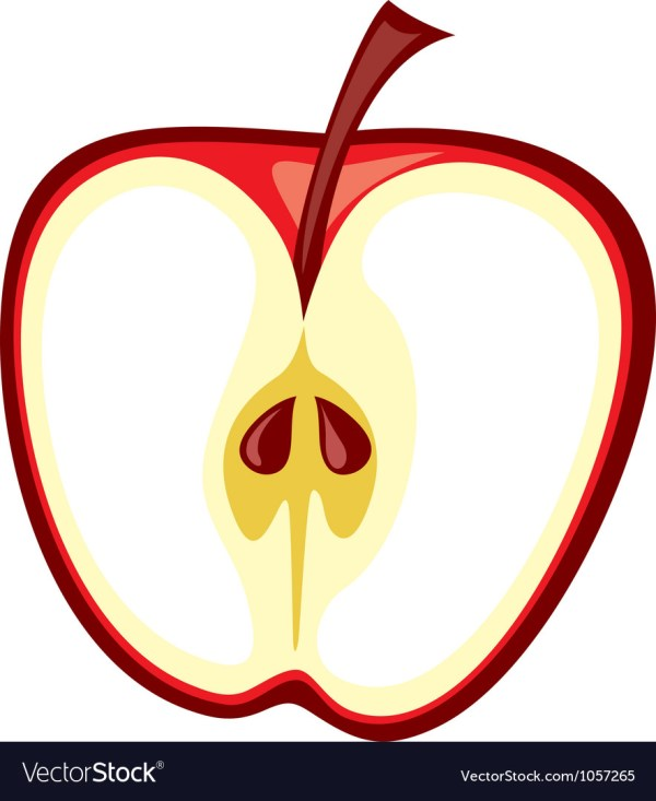 of apple royalty free vector