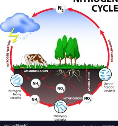 nitrogen cycle images stock pictures royalty free nitrogen  [ 944 x 1080 Pixel ]