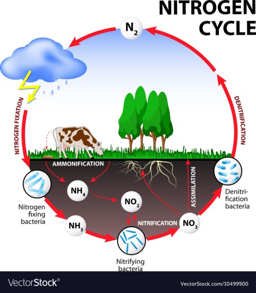 small resolution of nitrogen cycle images stock pictures royalty free nitrogen