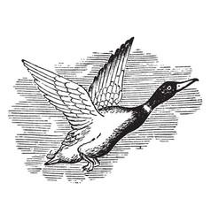 Hawk Skull Diagram Hawk Wings Wiring Diagram ~ Odicis