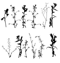 Plant Vector Images (over 370,000)