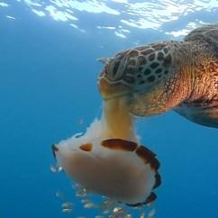 Leatherback Sea Turtle Food Web Diagram Buffet Table Loggerhead