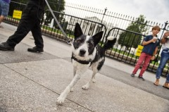Gainer suggests a fence around the Capitol, similar to the barricades at the White House. (Tom Williams/CQ Roll Call File Photo)