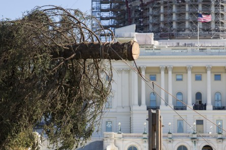 UNITED STATES - NOVEMBER 20 - The U.S. Capitol Christmas Tree is unloaded onto the West Front of the Capitol in Washington, Friday, November 20, 2015. The 74-foot Lutz Spruce tree is from the Chugach National Forest in Alaska. (Photo By Al Drago/CQ Roll Call)