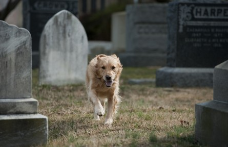 Historic Congressional Cemetery's annual Day of the Dog features beer, dogs and even a foot race for humans. (Tom Williams/CQ Roll Call File Photo)