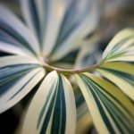 Creative Flower Photography With Lensbaby Sol Series