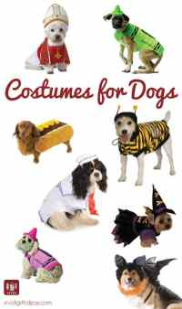 8 Cute Halloween Costumes for Dogs - Vivid's Gift Ideas