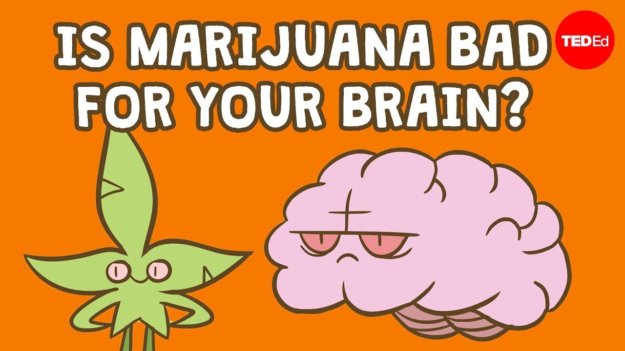食用大麻會損害你的腦嗎? (Is marijuana bad for your brain? - Anees Bahji) - VoiceTube《看影片學英語》