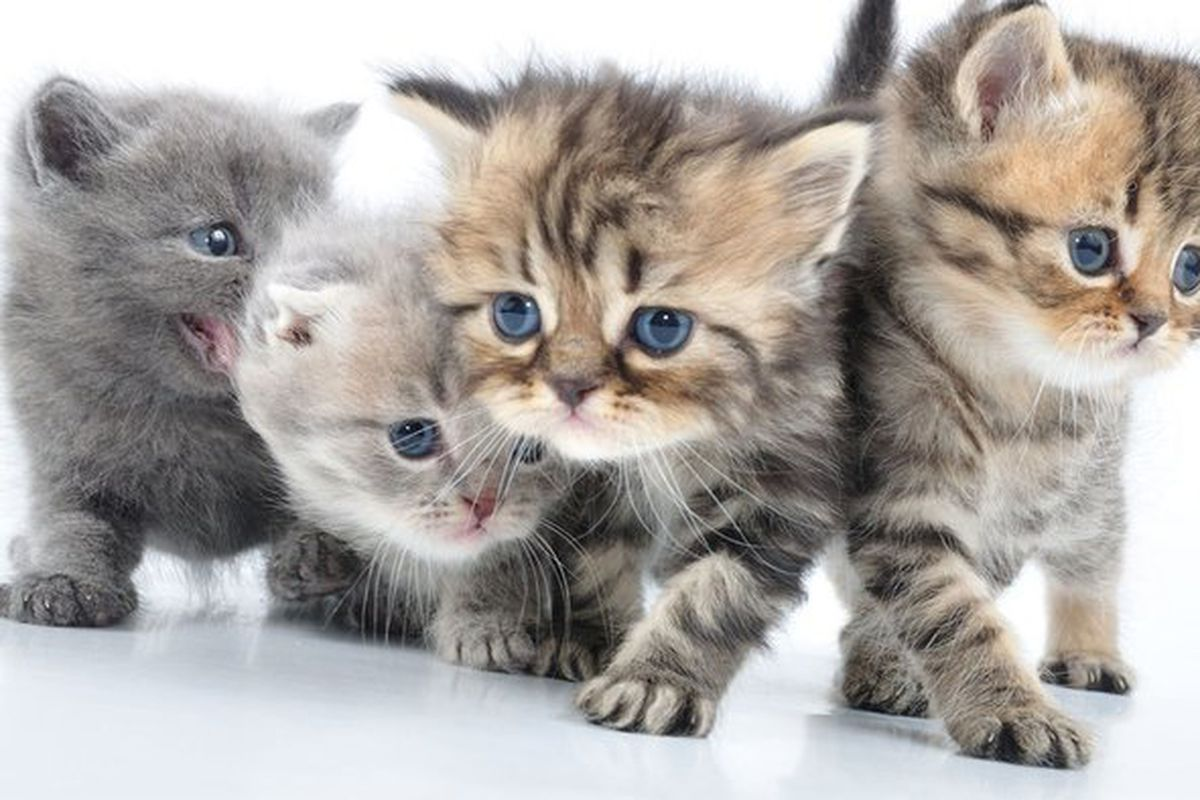 if these cute cats