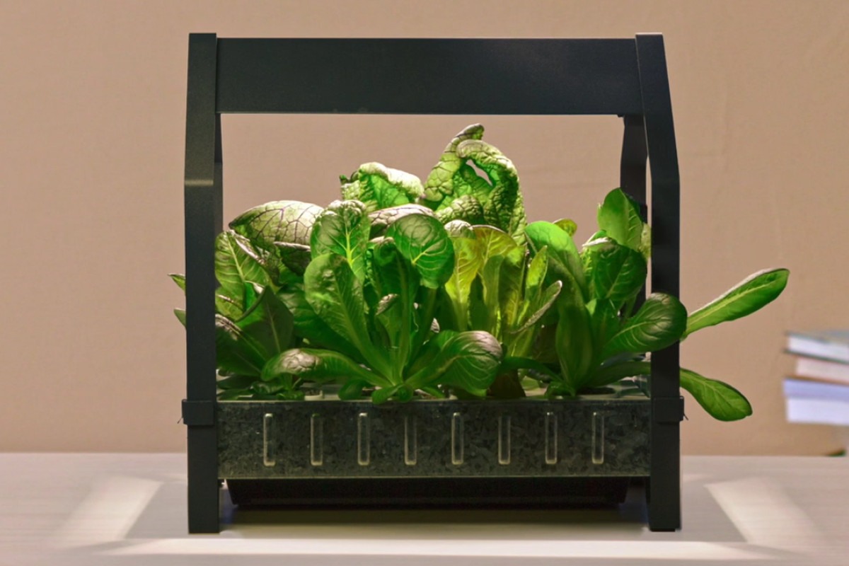 Ikea Wants to Put a Hydroponic Garden in Every Home