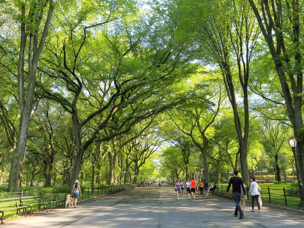Central Park Secrets Of York Famous - Curbed Ny