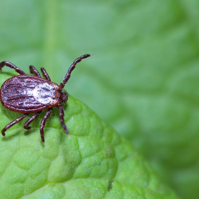 How To Kill Ticks in Your Yard - This Old House