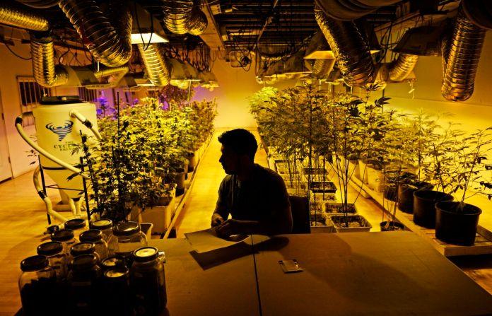 Ein Marihuana-Geschäftsführer bereitet sich auf den ersten Tag der Freizeitverkäufe in Denver, Colorado vor.