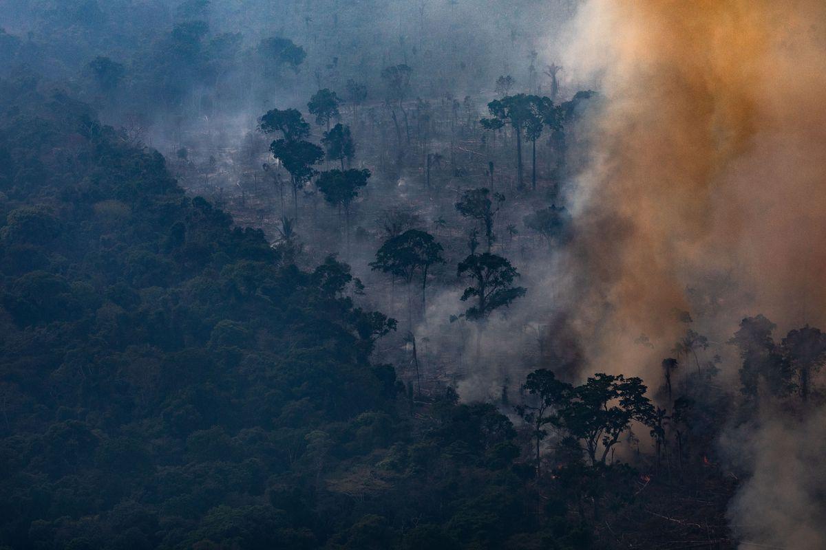 amazon rainforest fires donation