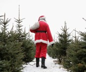 environmentally friendly christmas tree