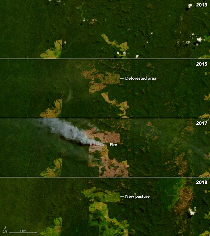 Clearing the rainforest to make way for ranches and agriculture is a process that can take several years of logging and burning.