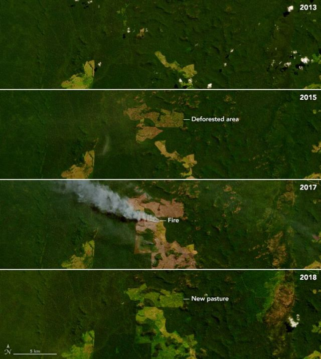 Deforestation to make way for pasture and agriculture is a process that can take years of logging and burning.
