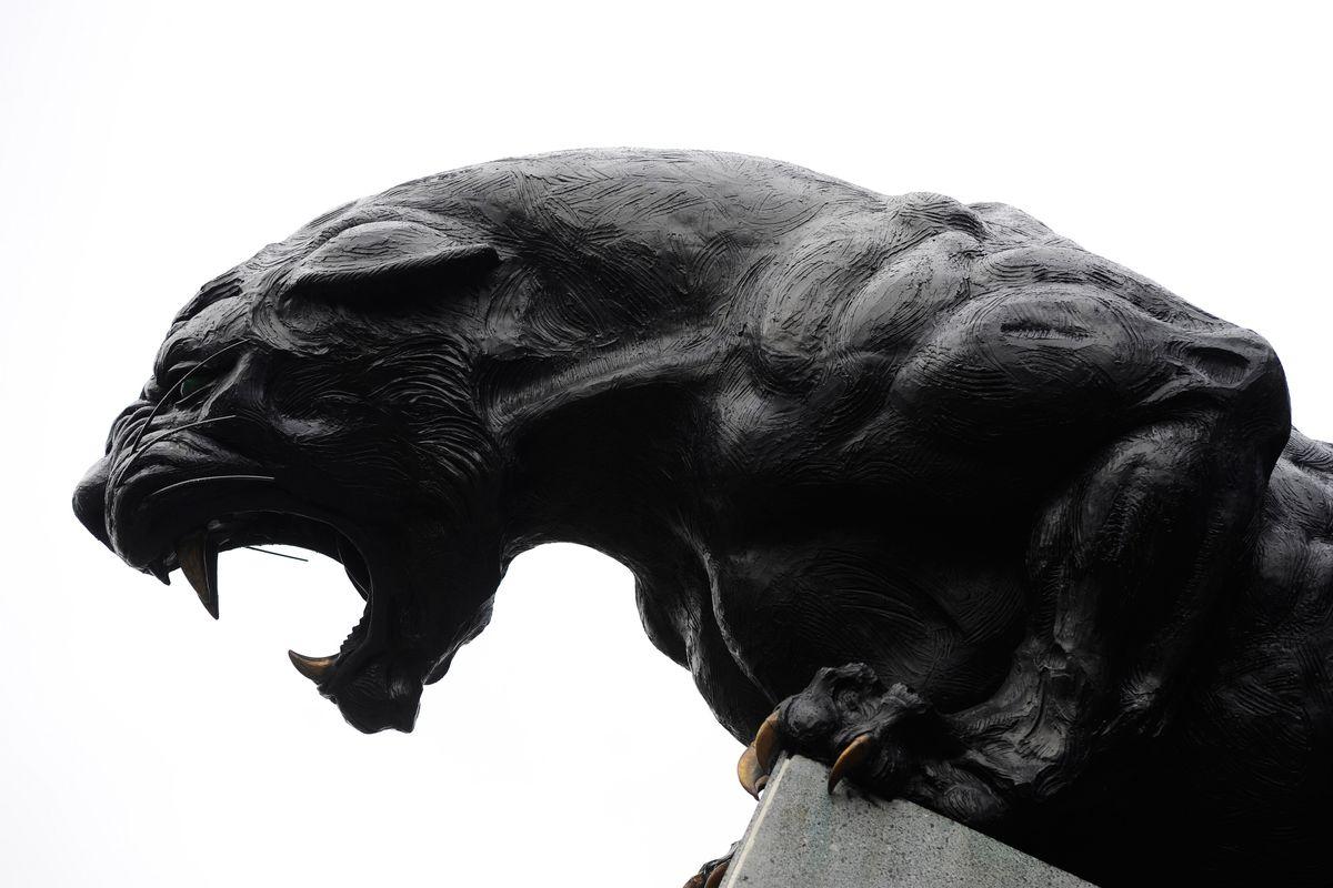 The Scratching Post Carolina Panthers News 42816  Cat